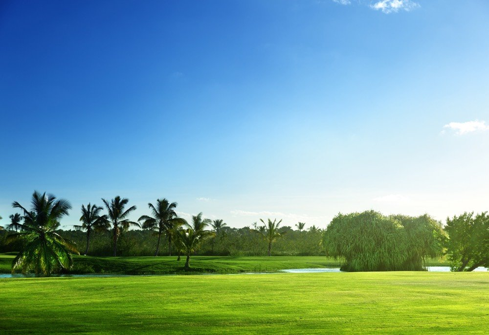 Golf course with green grass and trees